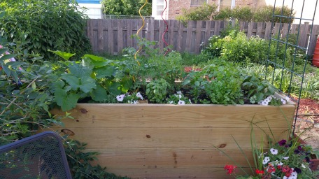 Container Garden as of June 16.